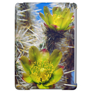 Silver Cholla Cactus Wildflowers