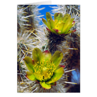 Silver Cholla Cactus Wildflowers Card