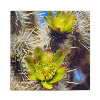 Silver Cholla Cactus Wildflowers Wood Coaster