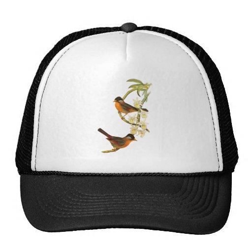 Silver-eared Mesia Trucker Hats