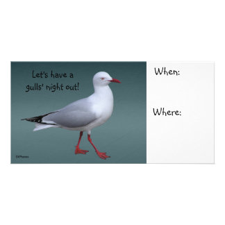 Silver Gull Photocard Picture Card