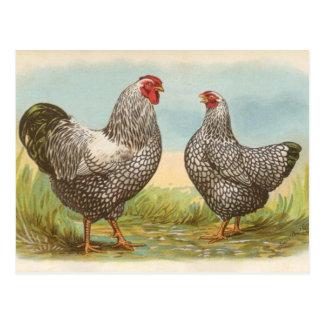 Silver Laced Wyandottes Postcard