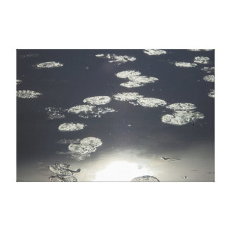 Silver leaves of water lilies canvas prints