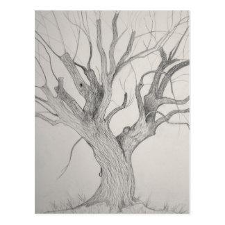 Silver Maple postcard