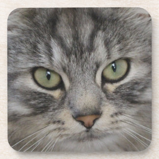 Silver Persian Cat Face Hard Plastic Coasters
