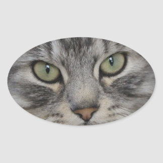 Silver Persian Cat Face Oval Stickers