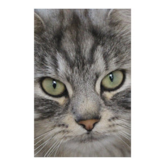 Silver Persian Cat Face Stationery