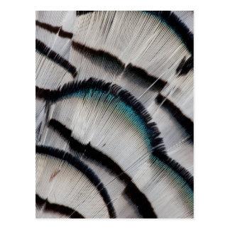 Silver Pheasant Feather Design Postcard