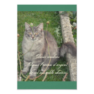 Silver plated kitten 9 cm x 13 cm invitation card