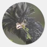 Silver Polish Rooster Round Sticker