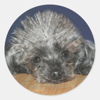 Silver poodle round sticker