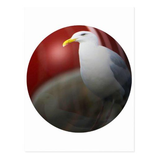 Silver sea gull post card