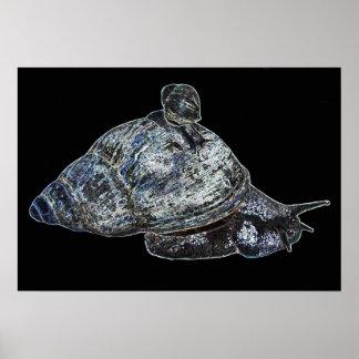 Silver Snail Poster
