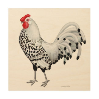 Silver Spangled Hamburg Rooster Wood Wall Art Wood Canvases