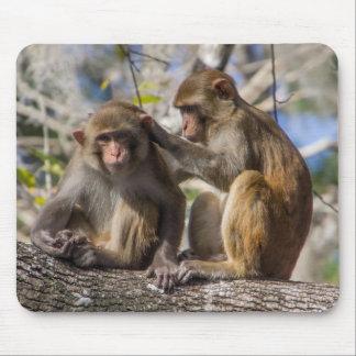 Silver Springs Monkeys Mouse Mat