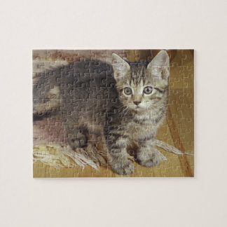 Silver tabby kitten, eight weeks old jigsaw puzzle