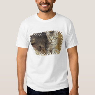 Silver tabby kitten, eight weeks old t-shirts