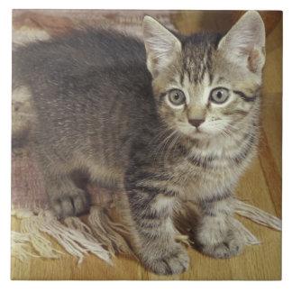 Silver tabby kitten, eight weeks old tile