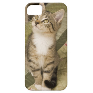 Silver tabby on bedspread iPhone 5 cover
