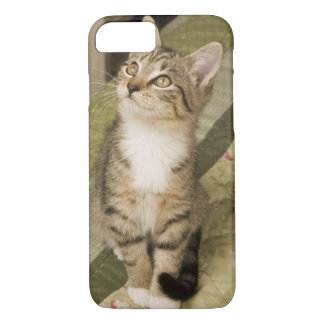 Silver tabby on bedspread iPhone 8/7 case