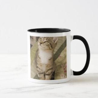 Silver tabby on bedspread mug