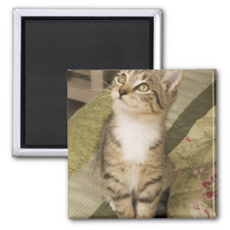 Silver tabby on bedspread square magnet