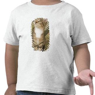 Silver tabby on bedspread t shirt