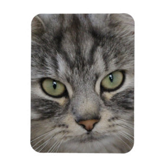 Silver Tabby Persian Cat Face Photo Magnet