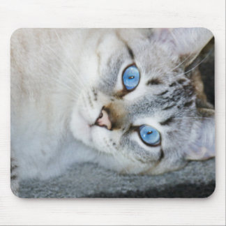Silver Tabby Siamese Mouse Pad
