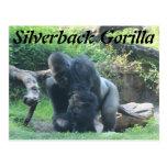 Silverback Gorilla # 1 Postcards