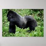 Silverback gorilla poster print