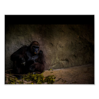 Silverback Gorilla Relaxing Poster