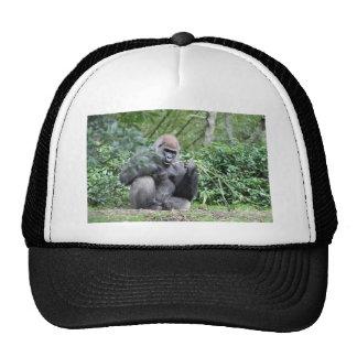 silverback gorillas trucker hat