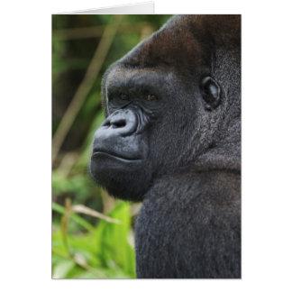 Silverback Lowland Gorilla, Gorilla Captive Card