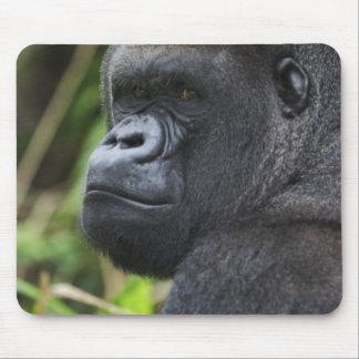 Silverback Lowland Gorilla, Gorilla Captive Mouse Mat