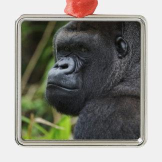 Silverback Lowland Gorilla, Gorilla Captive Silver-Colored Square Decoration