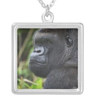 Silverback Lowland Gorilla, Gorilla Captive Silver Plated Necklace