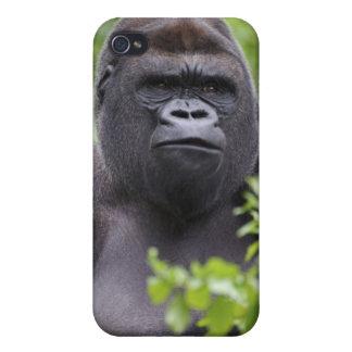 Silverback Lowland Gorilla Gorilla gorilla iPhone 4 Cases