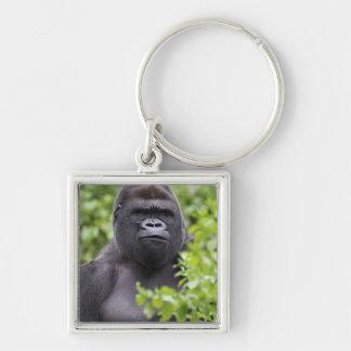 Silverback Lowland Gorilla, Gorilla gorilla, Key Ring