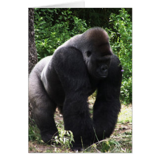 Silverback Male Gorilla walking head down.jpg Greeting Card