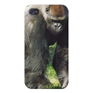 Silverback Male Lowland Gorilla Standing Up Cover For iPhone 4