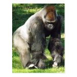 Silverback Male Lowland Gorilla Standing Up Postcards