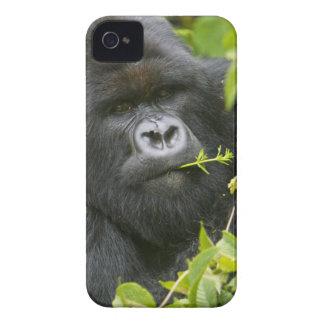 Silverback Mountain Gorilla iPhone 4 Case-Mate Case