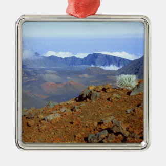 Silversword on Haleakala Crater  Rim from near 2 Christmas Ornament