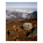 Silversword on Haleakala Crater  Rim from near 3 Poster