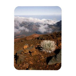 Silversword on Haleakala Crater  Rim from near 3 Rectangular Photo Magnet