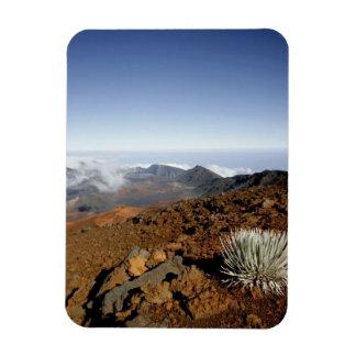 Silversword on Haleakala Crater  Rim from near Rectangular Photo Magnet