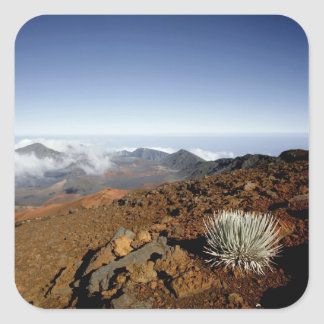 Silversword on Haleakala Crater  Rim from near Square Sticker