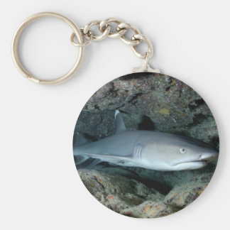 Silvertip Shark Key Ring