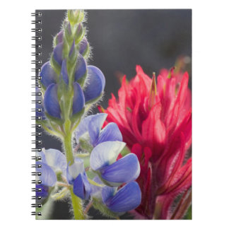 Silvery Lupine, Lavender Paintbrush Notebook
